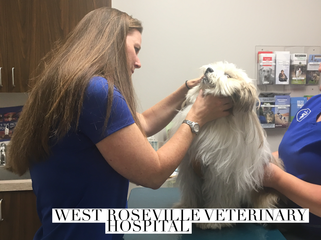 West Roseville Veterinary Hospital Wellness Exam 1
